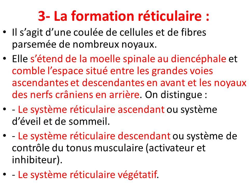 3- La formation réticulaire : Il sagit dune coulée de cellules et de fibres parsemée de nombreux noyaux. Elle sétend de la moelle spinale au diencépha