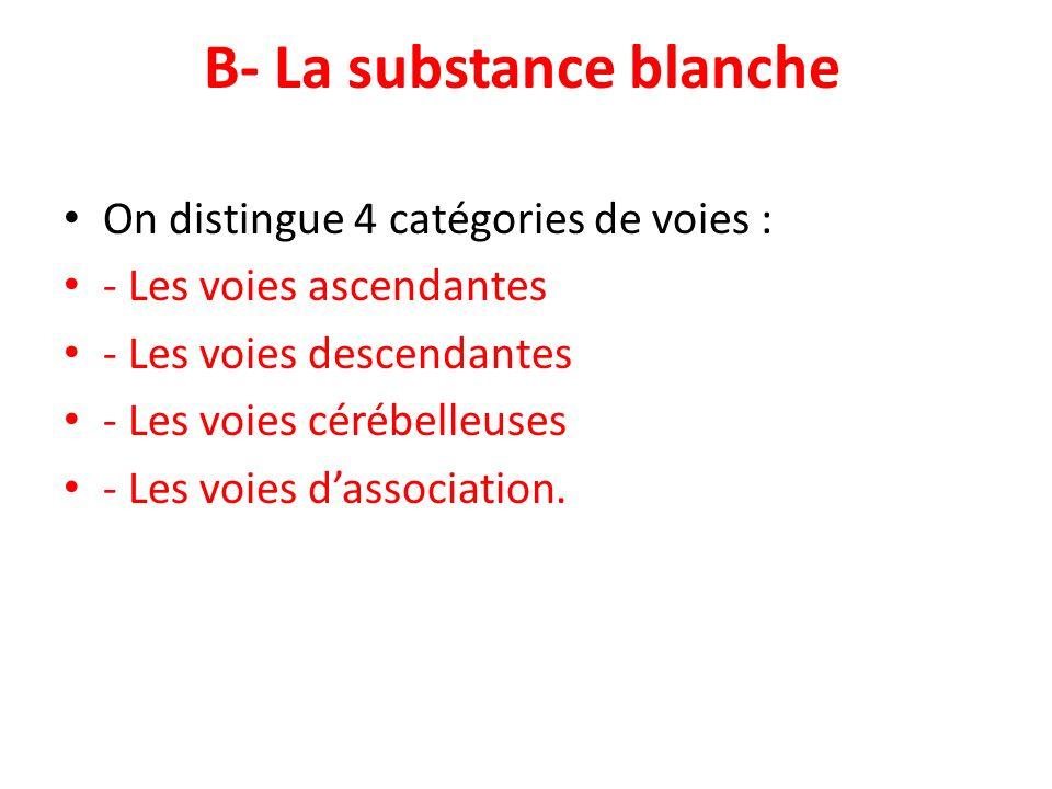 B- La substance blanche On distingue 4 catégories de voies : - Les voies ascendantes - Les voies descendantes - Les voies cérébelleuses - Les voies da