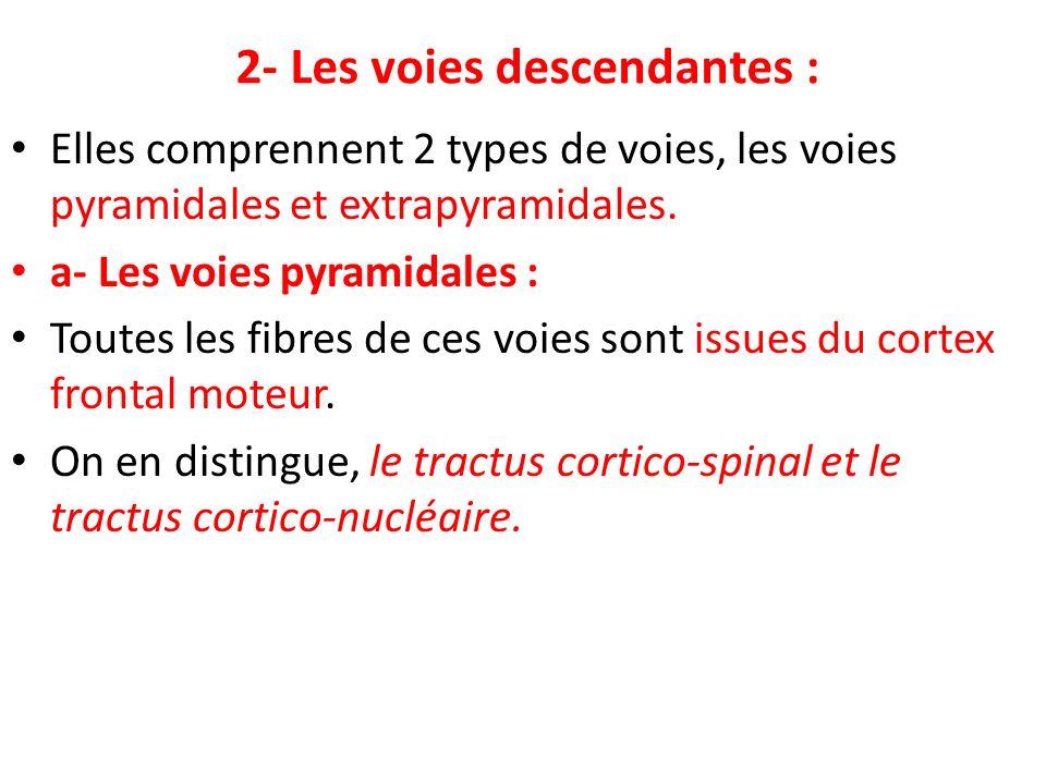 2- Les voies descendantes : Elles comprennent 2 types de voies, les voies pyramidales et extrapyramidales. a- Les voies pyramidales : Toutes les fibre
