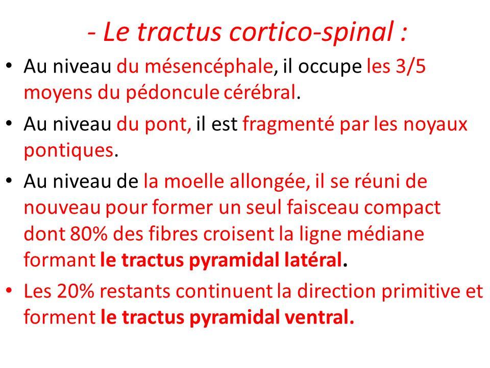 - Le tractus cortico-spinal : Au niveau du mésencéphale, il occupe les 3/5 moyens du pédoncule cérébral. Au niveau du pont, il est fragmenté par les n