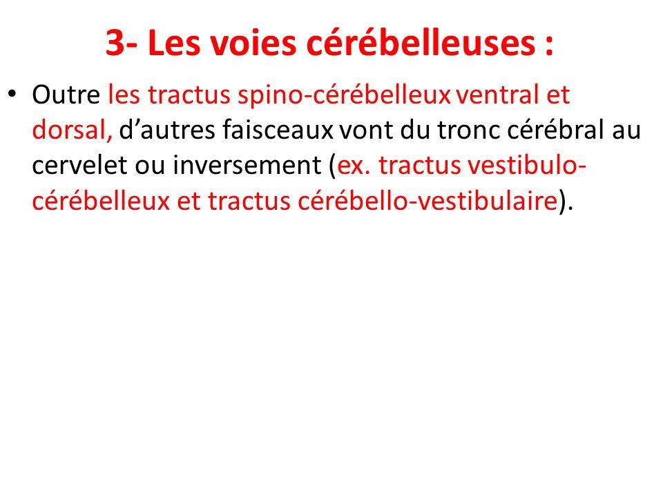3- Les voies cérébelleuses : Outre les tractus spino-cérébelleux ventral et dorsal, dautres faisceaux vont du tronc cérébral au cervelet ou inversemen