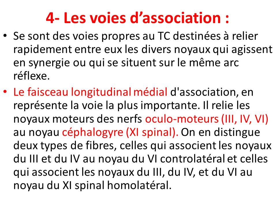 4- Les voies dassociation : Se sont des voies propres au TC destinées à relier rapidement entre eux les divers noyaux qui agissent en synergie ou qui