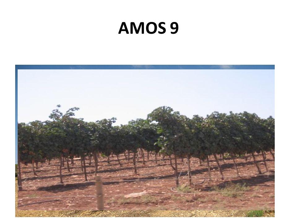 AMOS 9 13 Voici, les jours viennent, dit lÉternel, où le laboureur suivra de près le moissonneur ; et celui qui foule les raisins, celui qui répand la