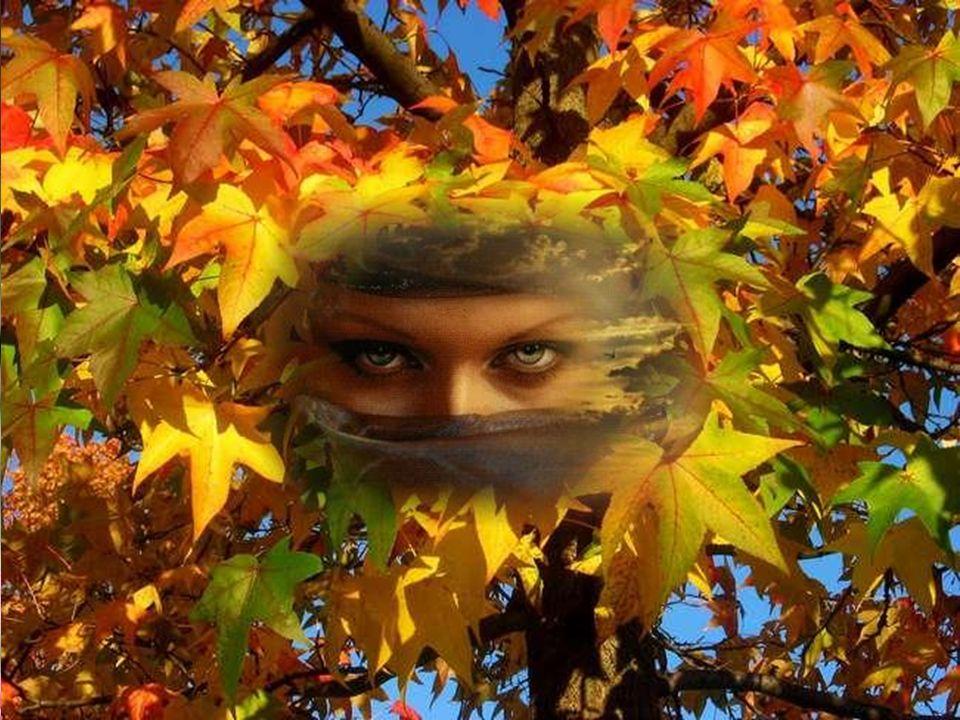 Tes yeux sont des ailleurs aux rives dun été, Qui rallument en mon cœur Des soleils oubliés.