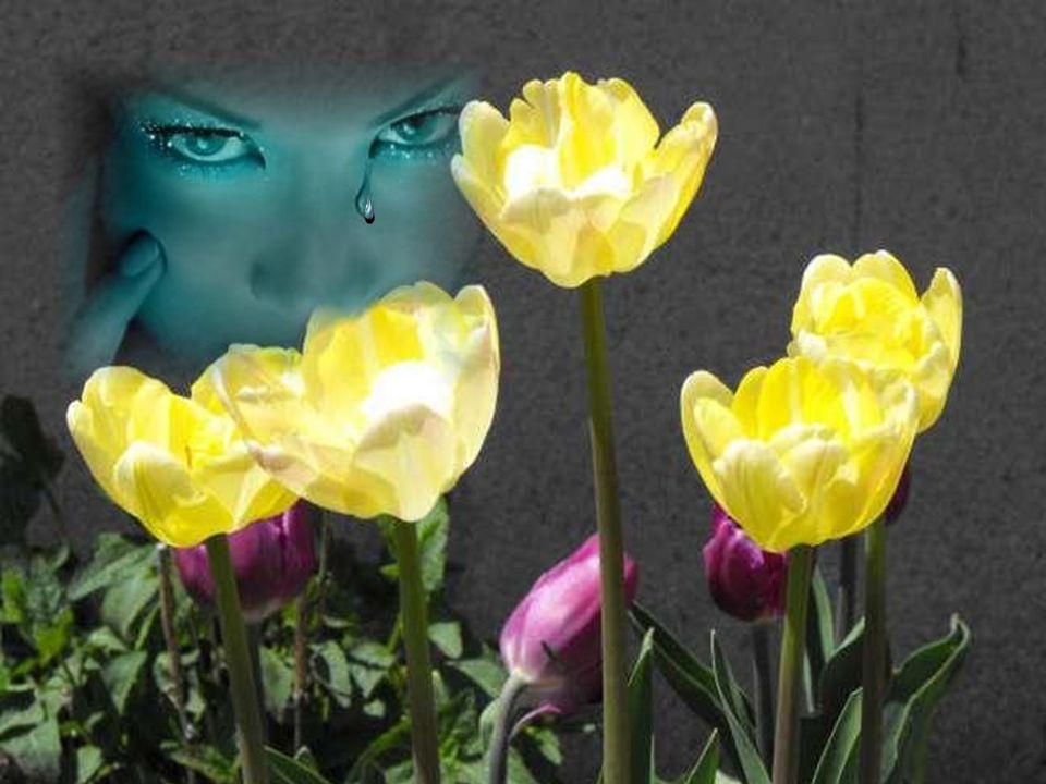 Les yeux entendent souvent mieux que les oreilles. Milan Kundera
