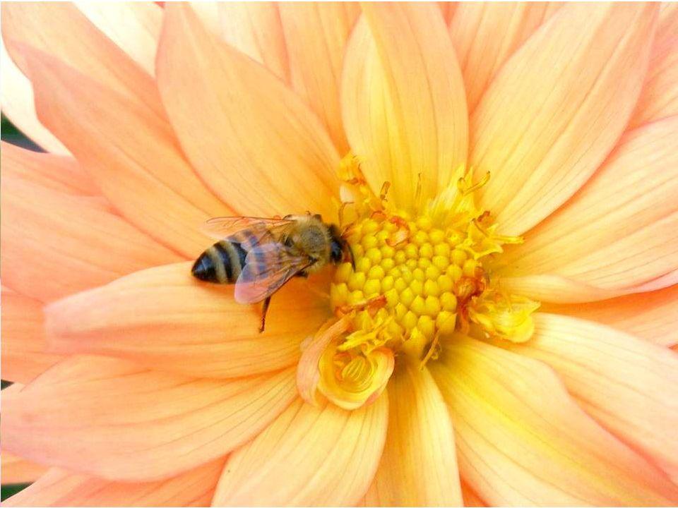 Nous avons raison de nous extasier sur une belle photo de fleur, de paysage, denfant. Mais les fleurs de votre jardin ou du parc municipal, les paysag