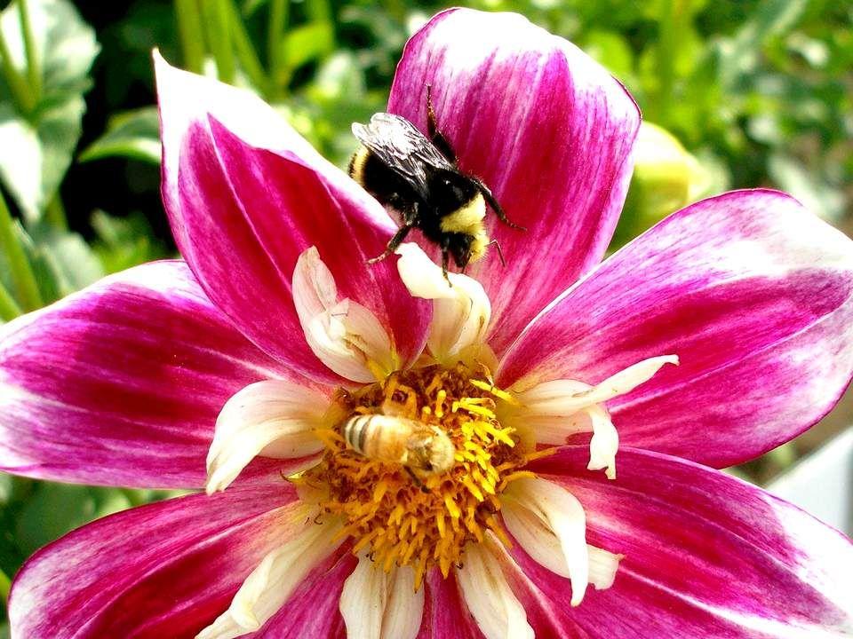 Et lorsque nous regardons une fleur, dans le jardin ou sur notre écran, pensons-nous à tout le travail quil y a derrière ? Les sélections, les croisem