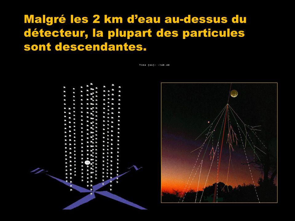 Malgré les 2 km deau au-dessus du détecteur, la plupart des particules sont descendantes.