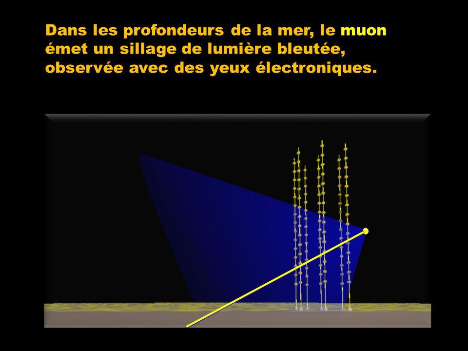 Dans les profondeurs de la mer, le muon émet un sillage de lumière bleutée, observée avec des yeux électroniques.