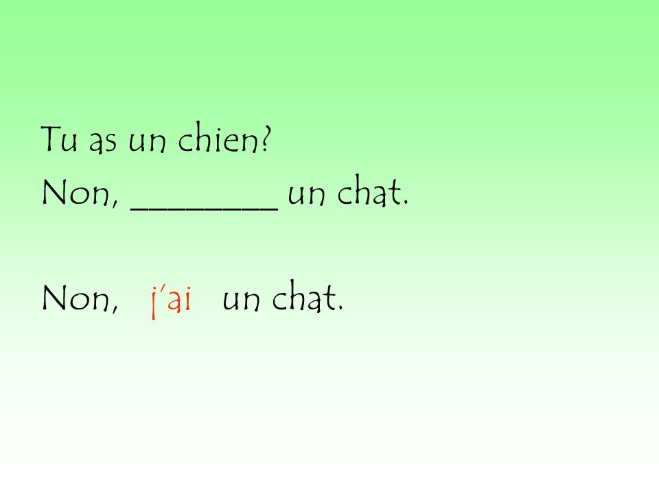 Tu as un chien Non, ________ un chat. Non, jai un chat.