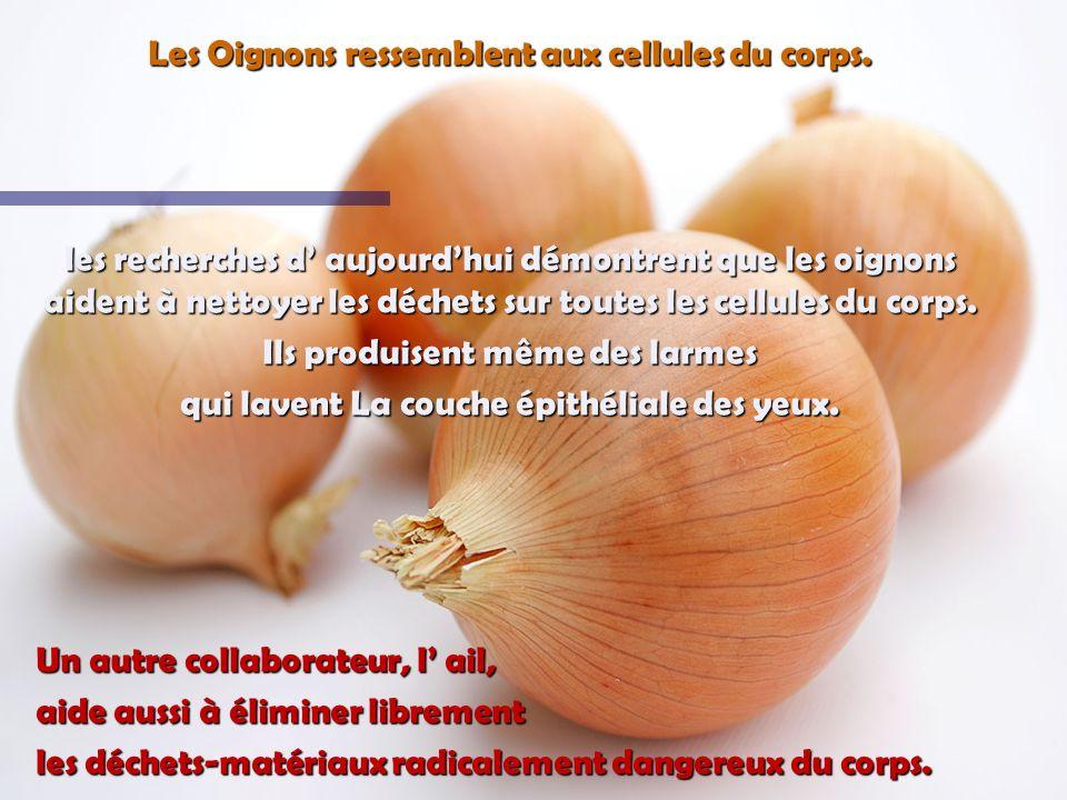 LOrange, la pamplemousse, et les autres fruits Citriques ressemblent aux glandes des seins chez les femmes Ils stimulent la santé des seins et le mouv