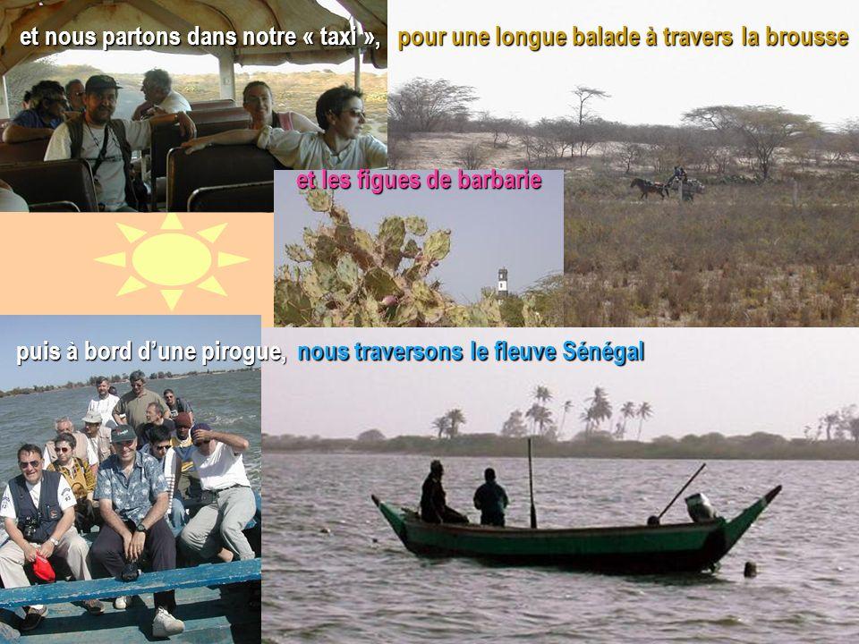 Lundi 31 mars, nous avons laissé nos avions à laéroport de Saint-Louis du Sénégal pour une longue balade à travers la brousse et nous partons dans not