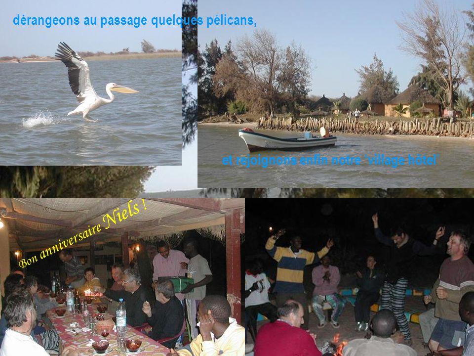 et rejoignons enfin notre village hôtel dérangeons au passage quelques pélicans, Bon anniversaire Niels !