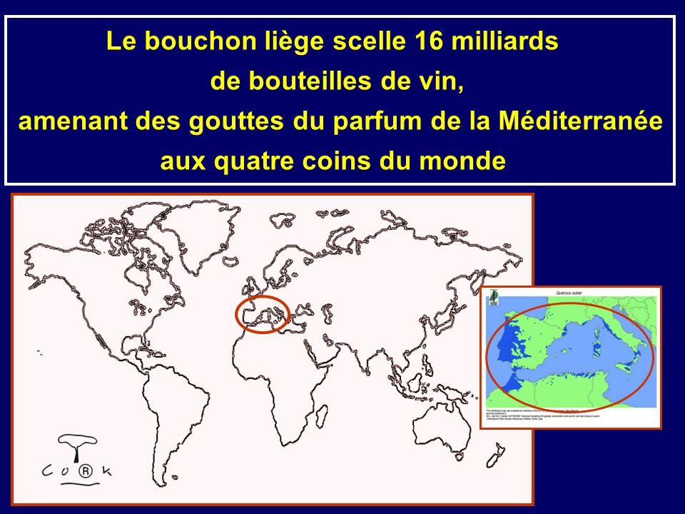 Le bouchon liège scelle 16 milliards de bouteilles de vin, amenant des gouttes du parfum de la Méditerranée aux quatre coins du monde
