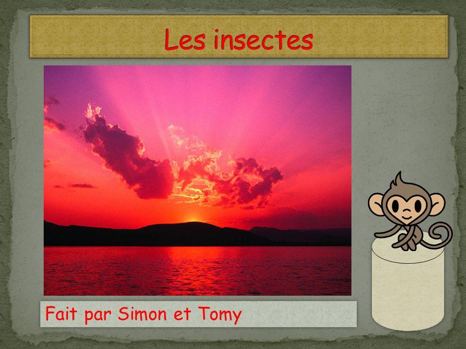 Fait par Simon et Tomy