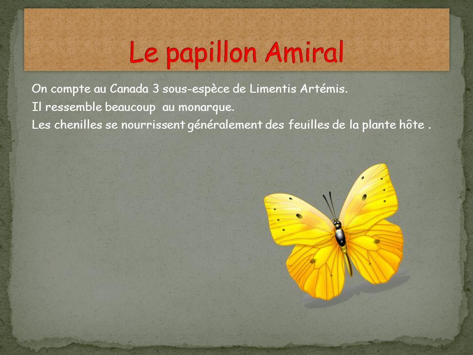 On compte au Canada 3 sous-espèce de Limentis Artémis. Il ressemble beaucoup au monarque. Les chenilles se nourrissent généralement des feuilles de la