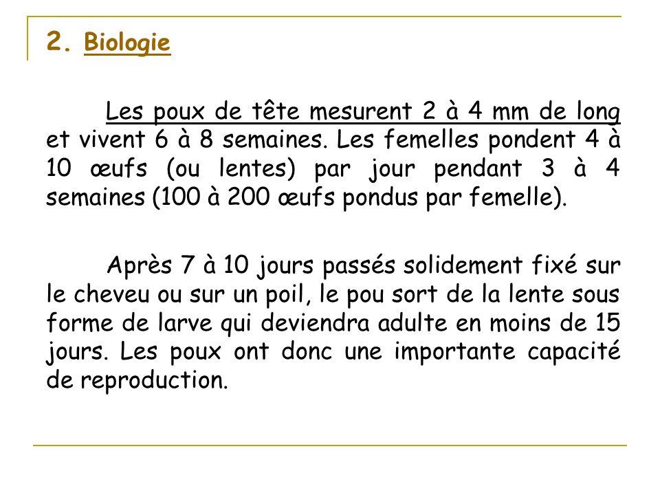 2. Biologie Les poux de tête mesurent 2 à 4 mm de long et vivent 6 à 8 semaines. Les femelles pondent 4 à 10 œufs (ou lentes) par jour pendant 3 à 4 s