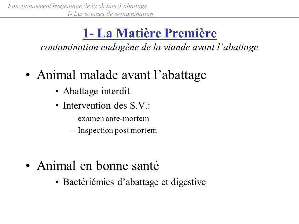 1- La Matière Première contamination endogène de la viande avant labattage Animal malade avant labattage Abattage interdit Intervention des S.V.: –exa