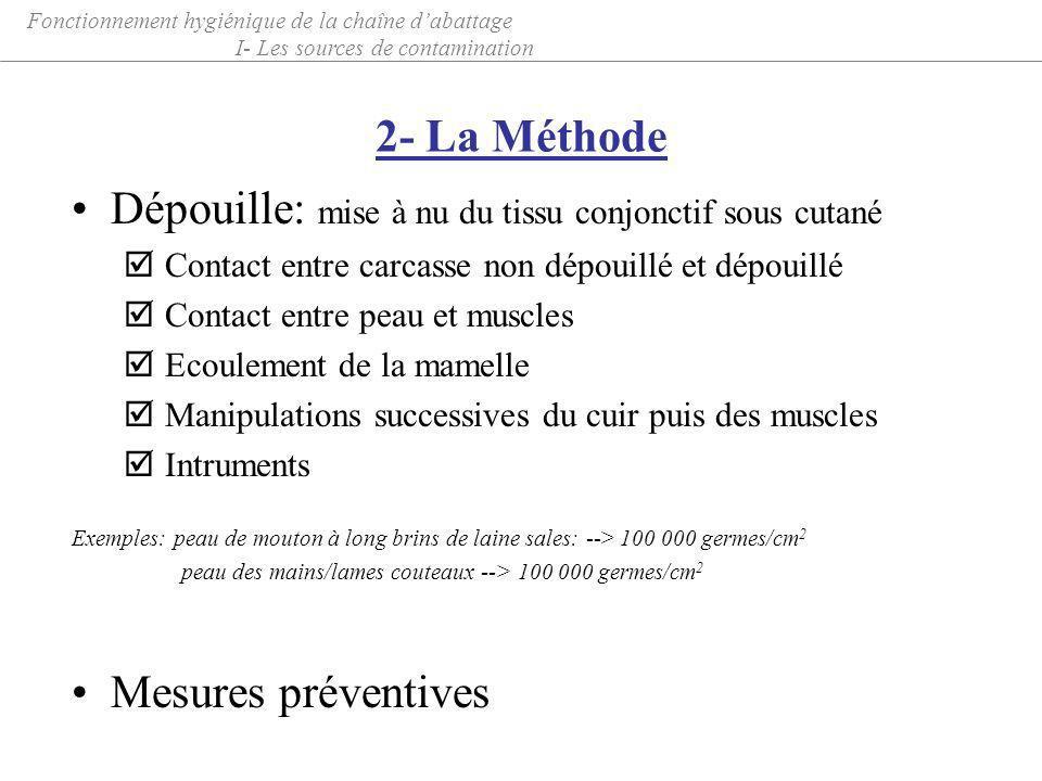 2- La Méthode Dépouille: mise à nu du tissu conjonctif sous cutané þ Contact entre carcasse non dépouillé et dépouillé þ Contact entre peau et muscles