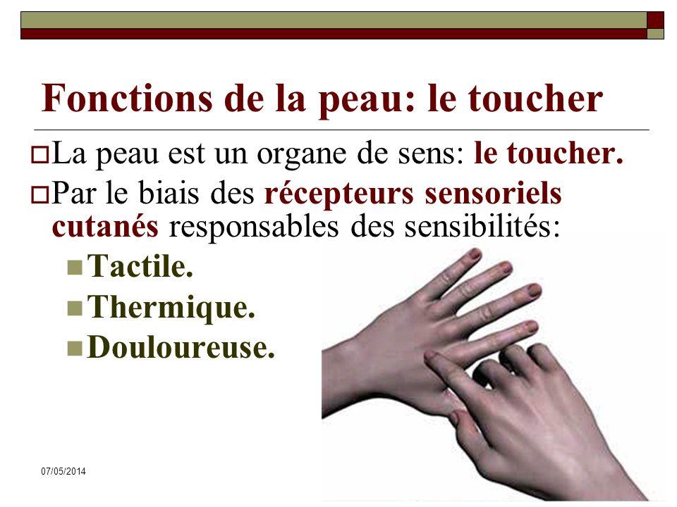 07/05/201433 Fonctions de la peau: le toucher La peau est un organe de sens: le toucher. Par le biais des récepteurs sensoriels cutanés responsables d