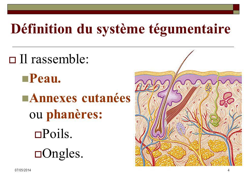 4 Définition du système tégumentaire Il rassemble: Peau. Annexes cutanées ou phanères: Poils. Ongles.