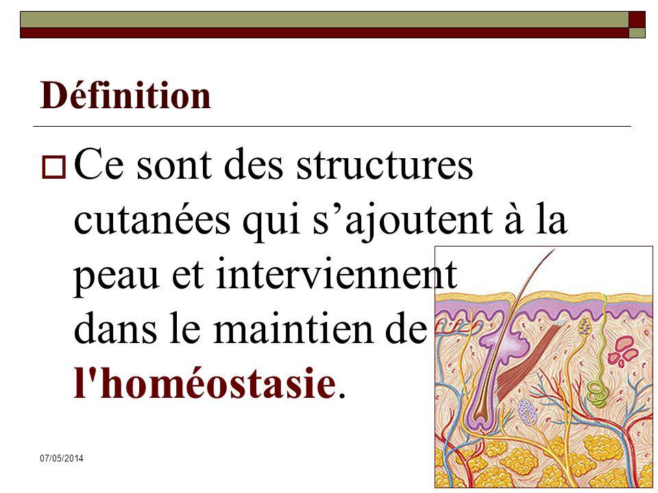 07/05/201441 Définition Ce sont des structures cutanées qui sajoutent à la peau et interviennent dans le maintien de l'homéostasie.