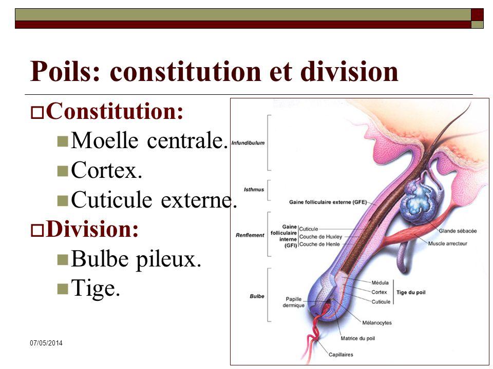 07/05/201446 Poils: constitution et division Constitution: Moelle centrale. Cortex. Cuticule externe. Division: Bulbe pileux. Tige.