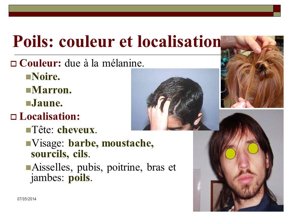07/05/201449 Poils: couleur et localisation Couleur: due à la mélanine.