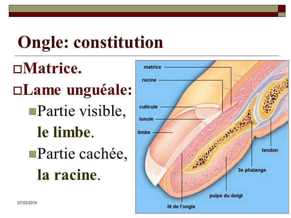 07/05/201459 Ongle: constitution Matrice. Lame unguéale: Partie visible, le limbe. Partie cachée, la racine.