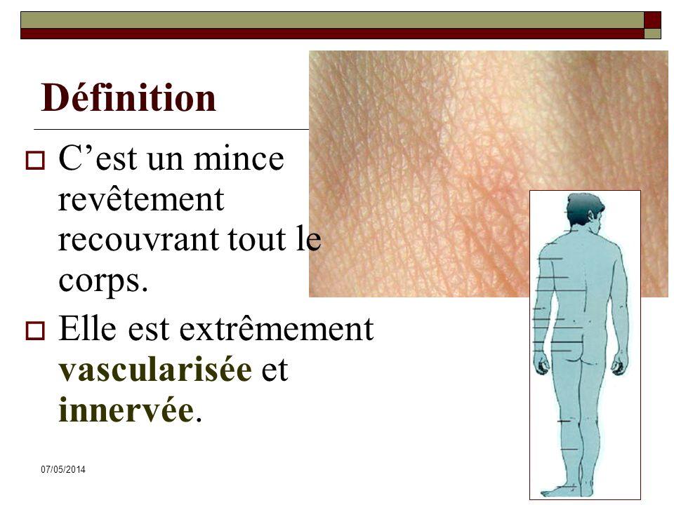 07/05/20147 Définition Cest un mince revêtement recouvrant tout le corps. Elle est extrêmement vascularisée et innervée.