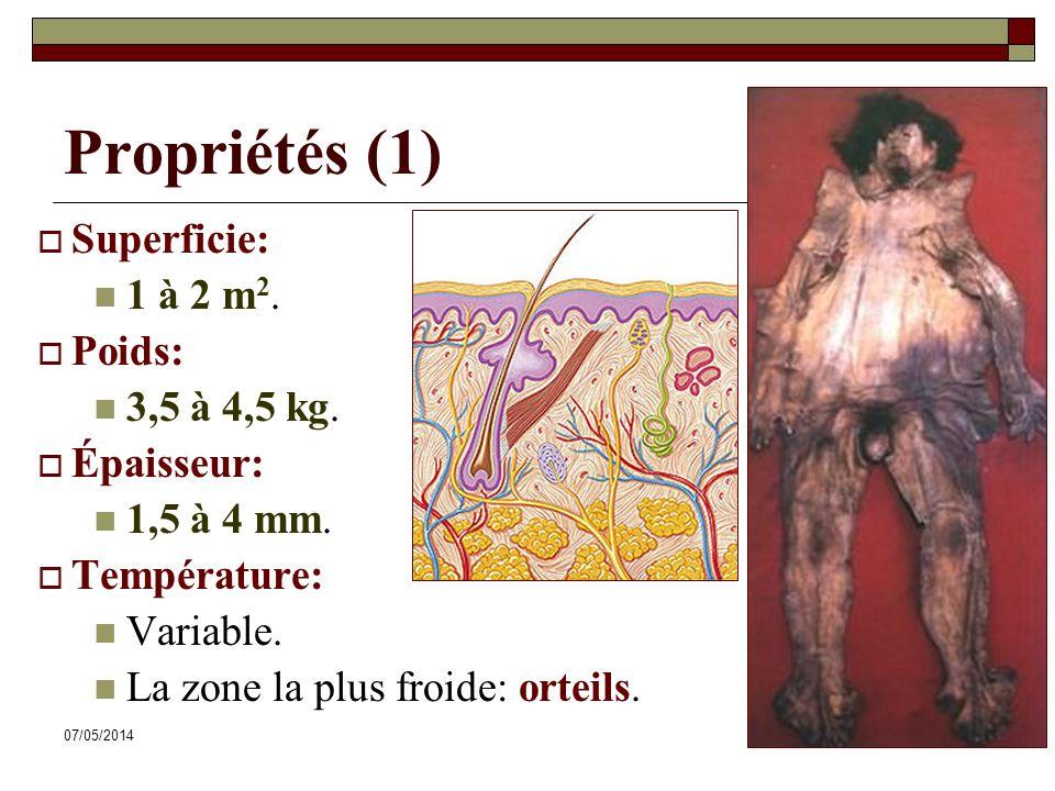 07/05/20149 Propriétés (1) Superficie: 1 à 2 m 2.Poids: 3,5 à 4,5 kg.