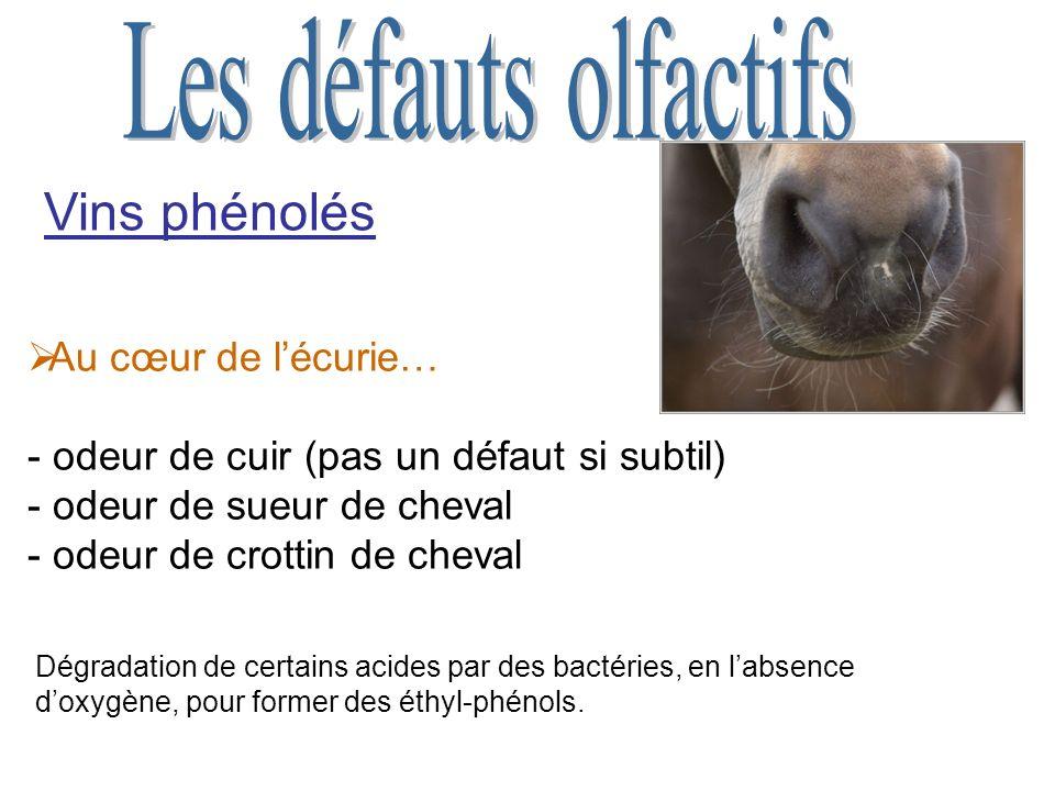 Vins phénolés Au cœur de lécurie… - odeur de cuir (pas un défaut si subtil) - odeur de sueur de cheval - odeur de crottin de cheval Dégradation de certains acides par des bactéries, en labsence doxygène, pour former des éthyl-phénols.