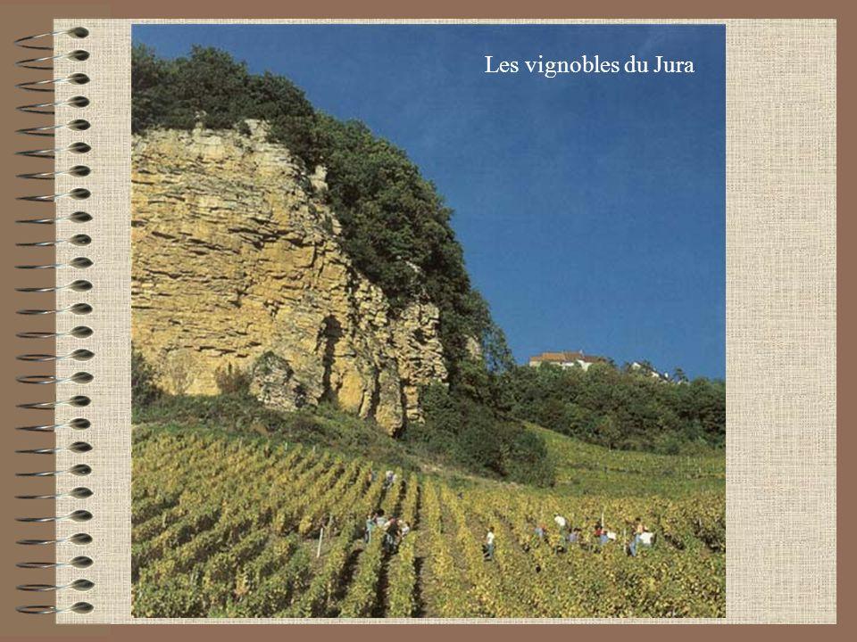 Les vins du Jura Ce vignoble millénaire sétend sur 1850 héctares; aujourdhui on produit: 4AOC: Arbois Côtes du Jura Château Chalon LEtoile 2 spécialités: Vin Jaune Vin de Paille Les vins sont issus de 5 cépages: Chardonnay, Savagnin (blancs), Poulsard, Trousseau, Pinot Noir (rouges)