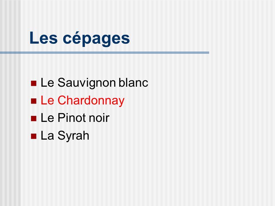 Le Chardonnay Généralités Le cépage le plus en vogue Vigoureux, productif Facilement satisfaisant