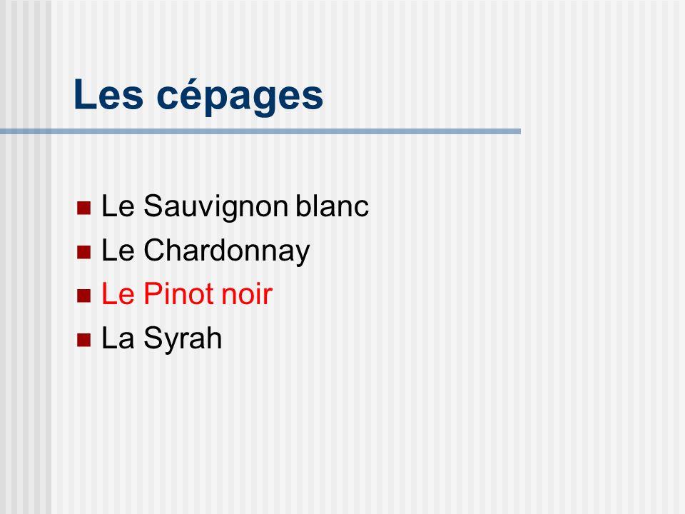 Le Pinot noir Généralités Originaire de Bourgogne comme le chardonnay Toutefois capricieux Rendement moindre