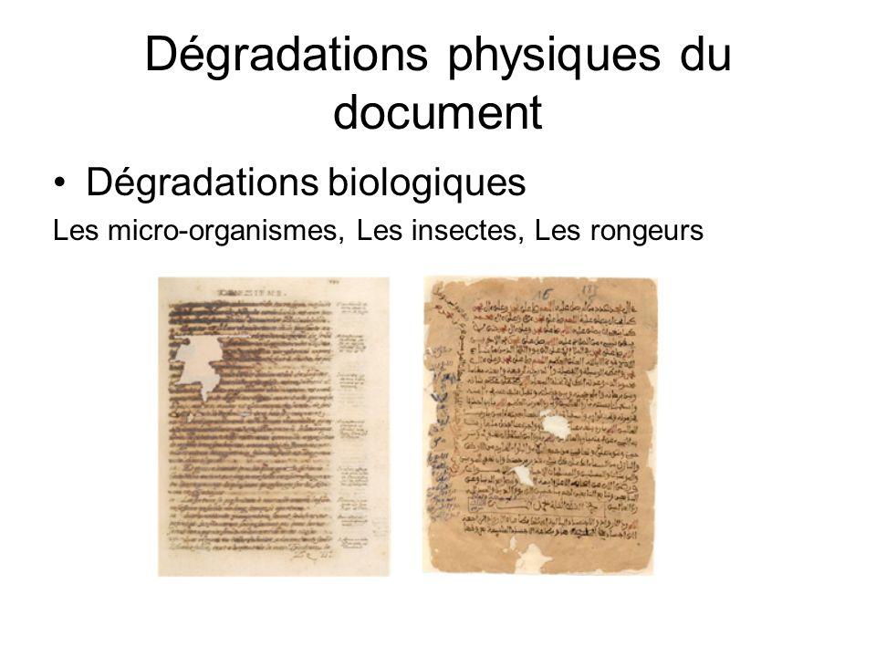 Dégradations physiques du document Dégradations biologiques Les micro-organismes, Les insectes, Les rongeurs