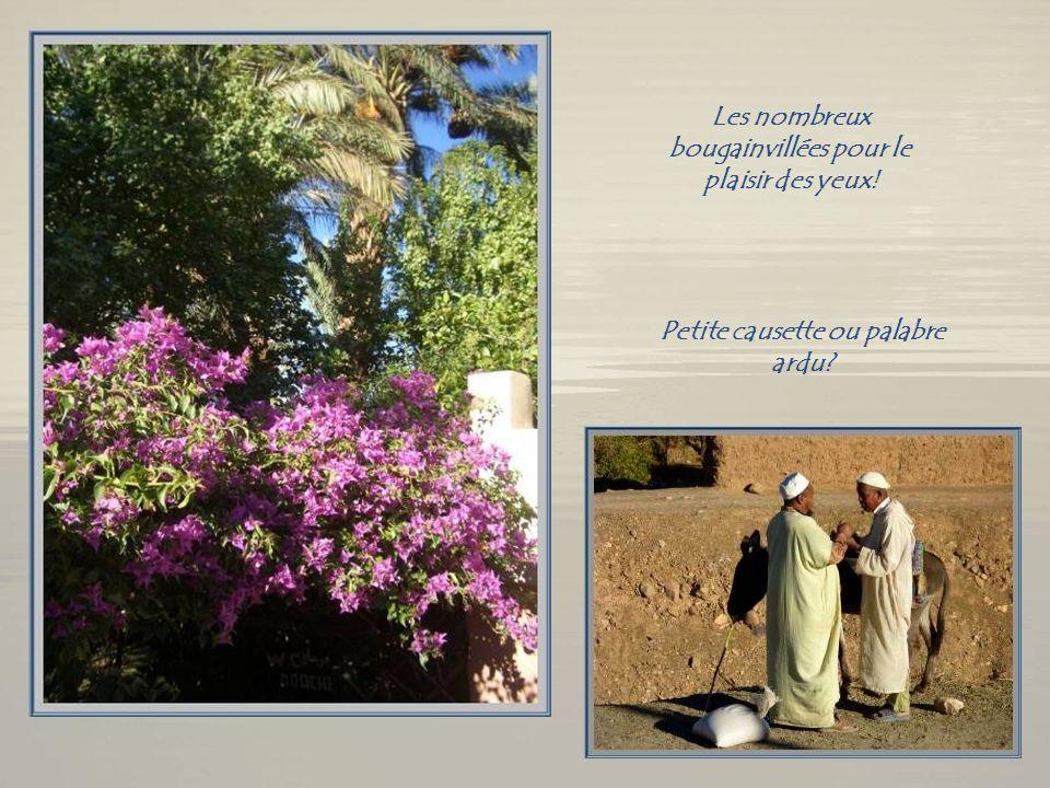 Colatropis et palmiers- dattiers Comme loranger, le colatropis arbore, en même temps, fleurs et fruits. Il entre dans la composition de produits médic
