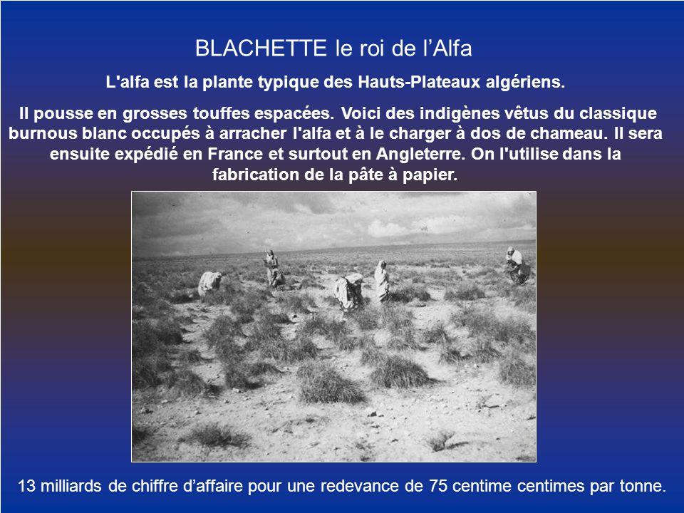 L'alfa est la plante typique des Hauts-Plateaux algériens. Il pousse en grosses touffes espacées. Voici des indigènes vêtus du classique burnous blanc