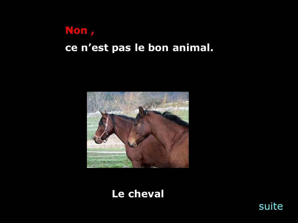 suite Non, ce nest pas le bon animal. Le cheval