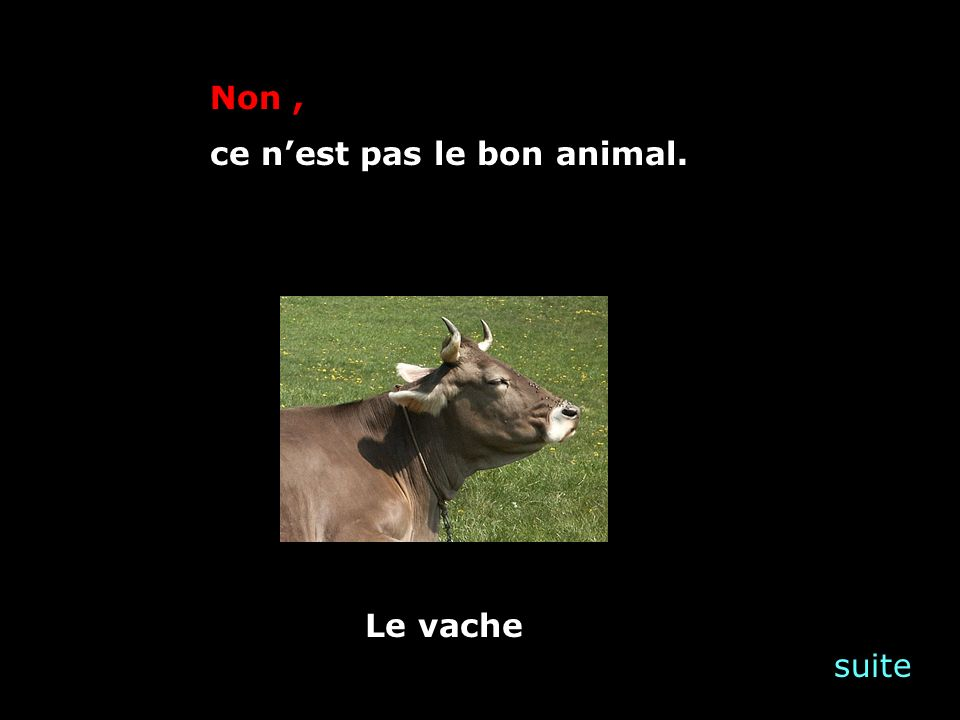 suite Non, ce nest pas le bon animal. Le vache