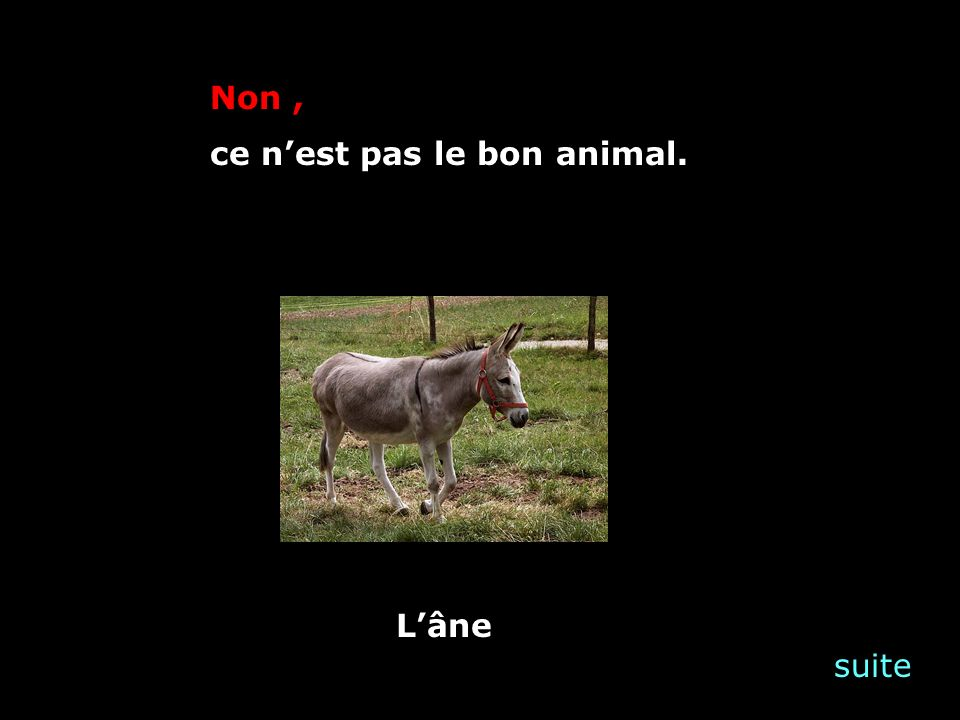 suite Non, ce nest pas le bon animal. Lâne