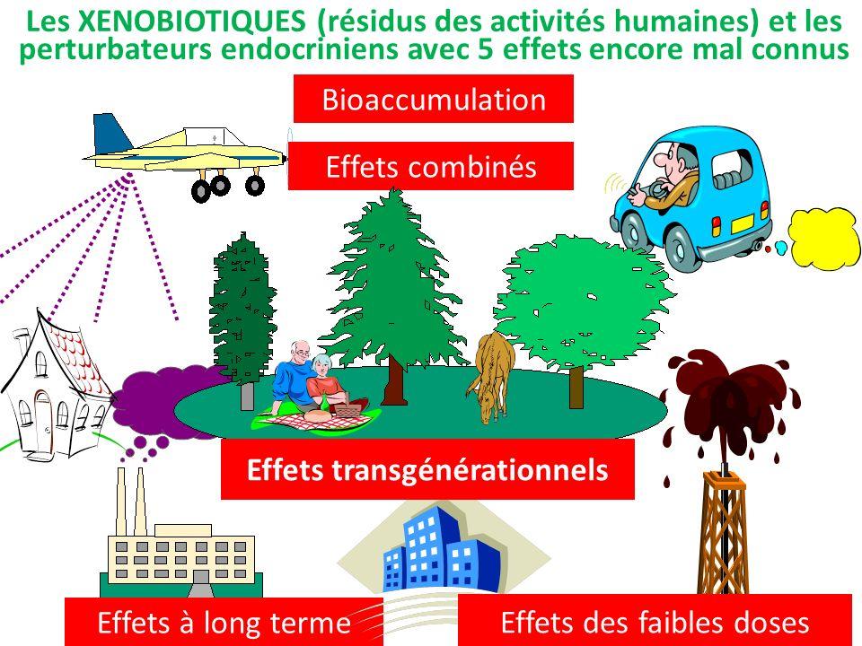 Bioaccumulation Effets à long terme Effets combinés Les XENOBIOTIQUES (résidus des activités humaines) et les perturbateurs endocriniens avec 5 effets encore mal connus Effets des faibles doses Effets transgénérationnels