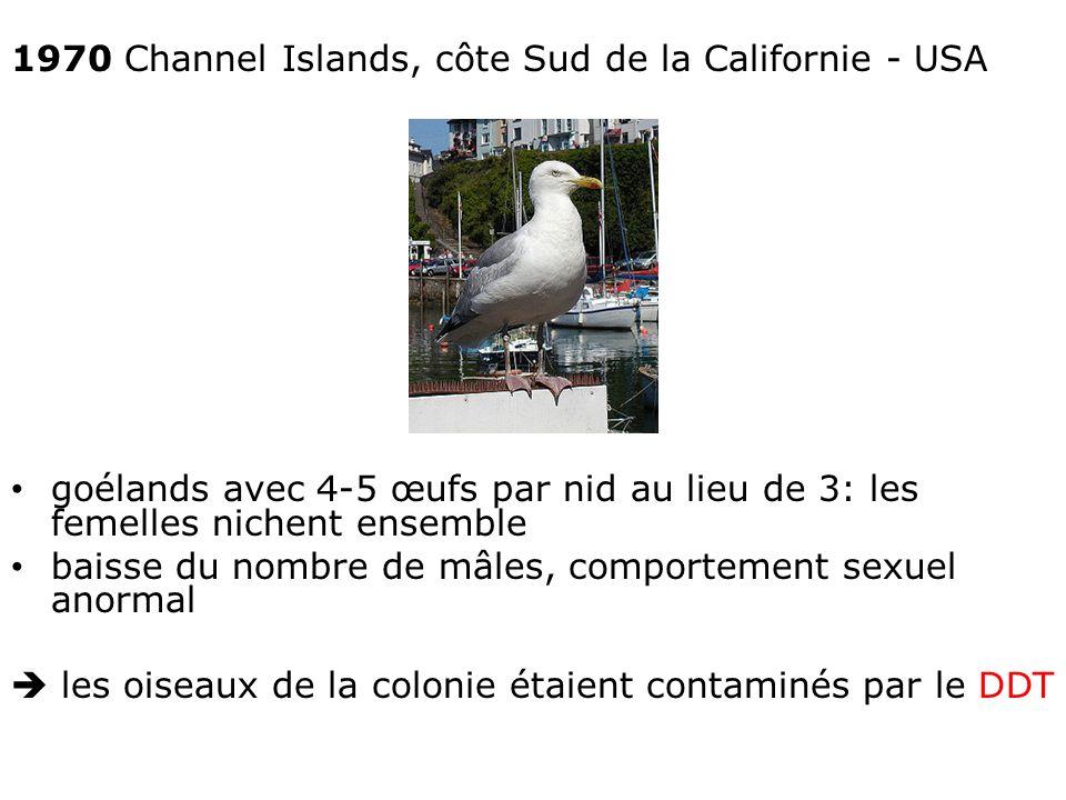 1970 Channel Islands, côte Sud de la Californie - USA goélands avec 4-5 œufs par nid au lieu de 3: les femelles nichent ensemble baisse du nombre de mâles, comportement sexuel anormal les oiseaux de la colonie étaient contaminés par le DDT