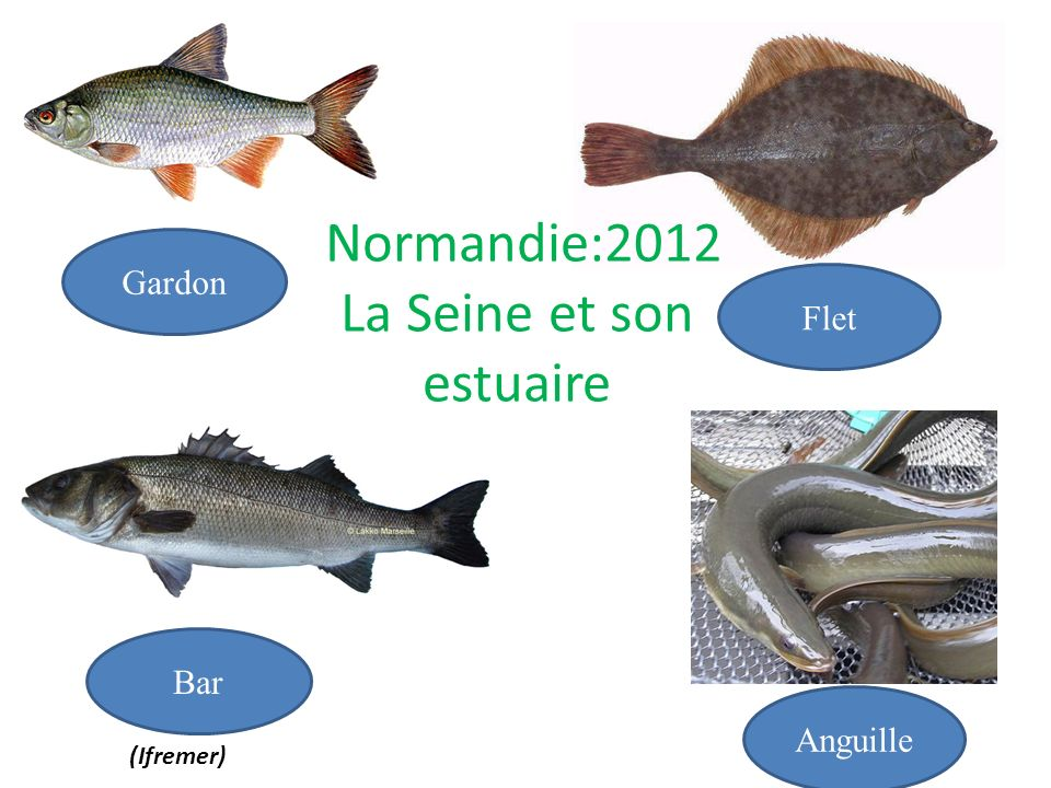 Gardon Flet Bar Anguille Normandie:2012 La Seine et son estuaire (Ifremer)