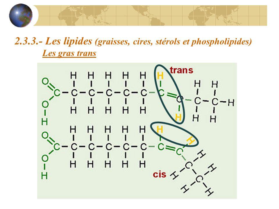 2.3.3.- Les lipides (graisses, cires, stérols et phospholipides) Les gras trans
