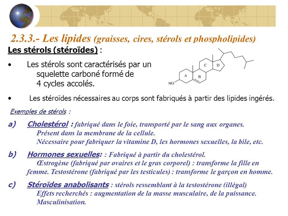 2.3.3.- Les lipides (graisses, cires, stérols et phospholipides) Les stérols (stéroïdes) : Les stérols sont caractérisés par un squelette carboné form