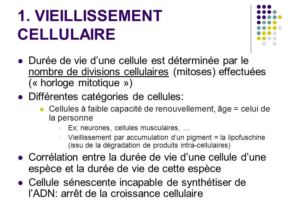 1. VIEILLISSEMENT CELLULAIRE Durée de vie dune cellule est déterminée par le nombre de divisions cellulaires (mitoses) effectuées (« horloge mitotique