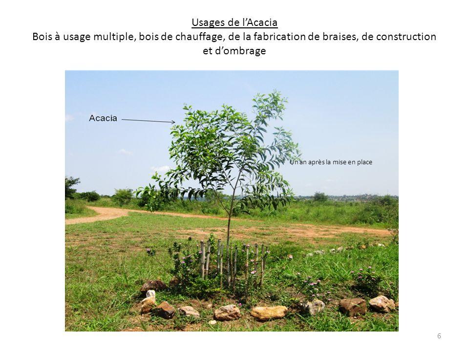 Arrosage des plantules par Monsieur le DF à loccasion de la fête du travail (1 er mai 2012) 5