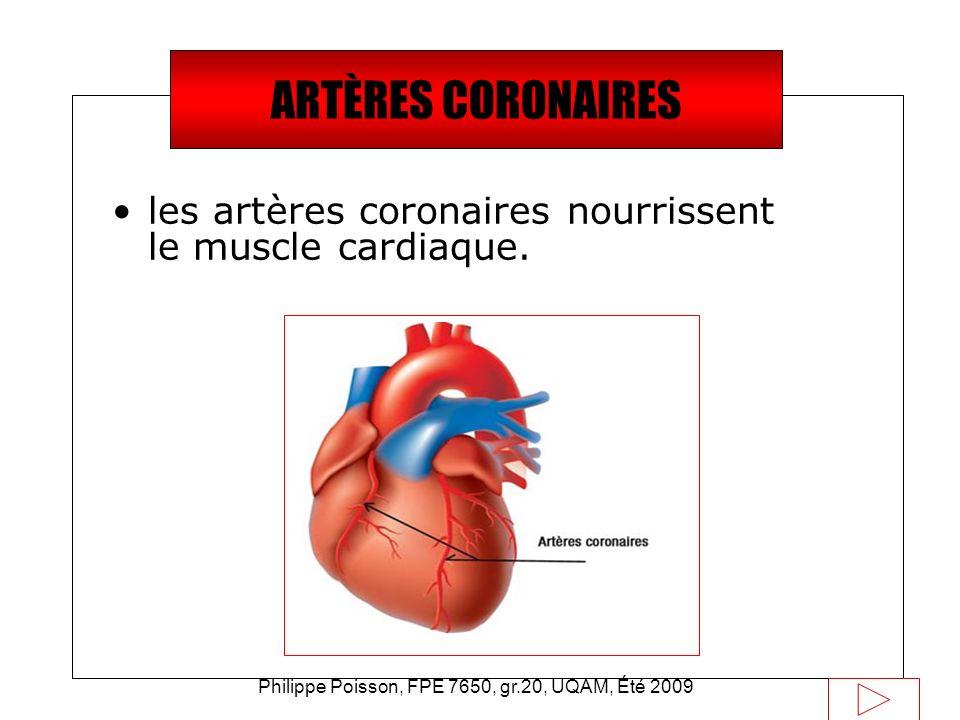 Philippe Poisson, FPE 7650, gr.20, UQAM, Été 2009 Saviez-vous que… les artères coronaires nourrissent le muscle cardiaque. ARTÈRES CORONAIRES