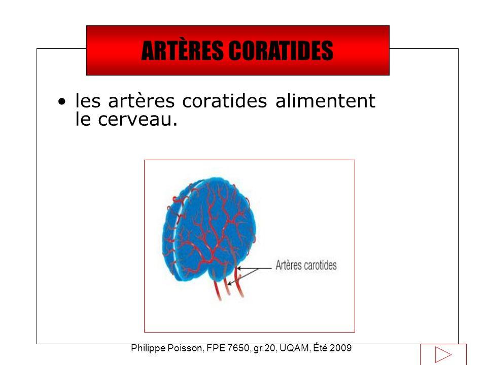 Philippe Poisson, FPE 7650, gr.20, UQAM, Été 2009 Saviez-vous que… les artères coratides alimentent le cerveau. ARTÈRES CORATIDES